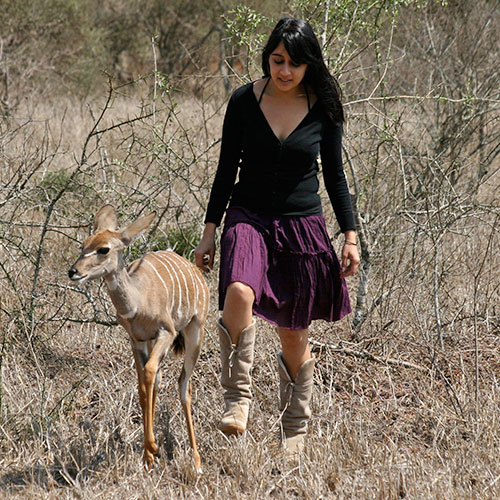 Walking with Kudu in the bush